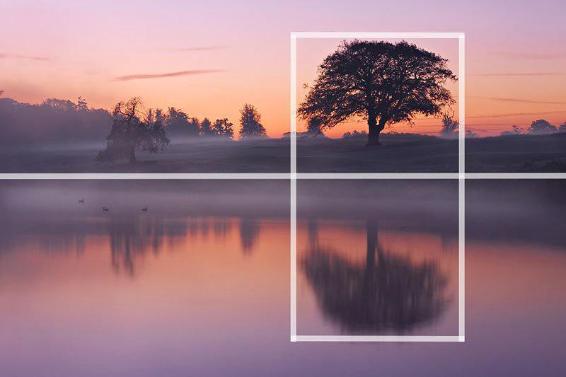 Đường thẳng ngang rìa con sông cắt đôi tạo hình ảnh đối xứng và điểm nổi bật chính là cây với tán lá rộng