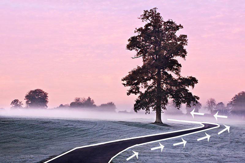 Đây là một dạng đường dẫn cong, giúp bức ảnh có chiều sâu và bố cục rõ ràng, tập trung vào cây cối đang mọc ven đường.