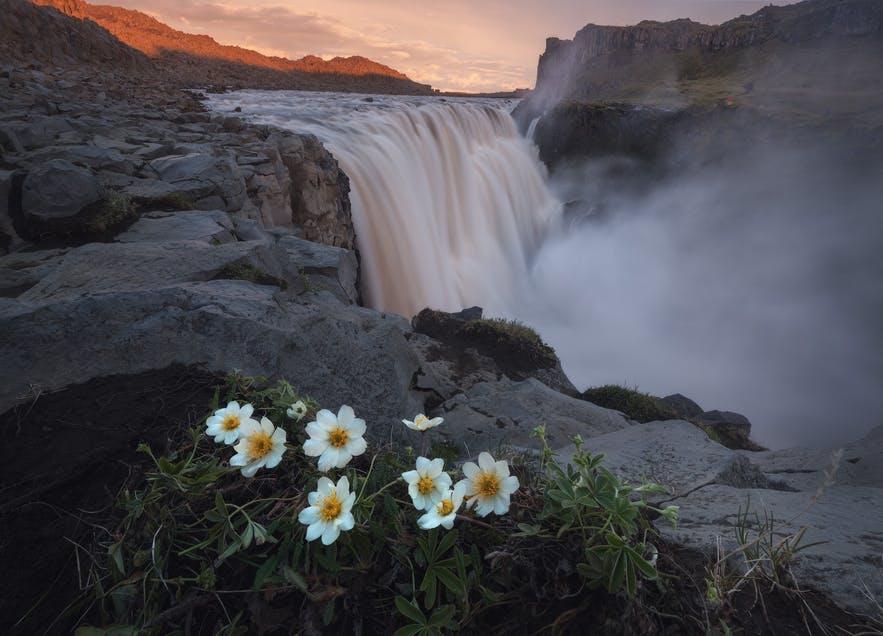 Bụi hoa cúc đóng vai trò như một tiêu điểm trong cách sắp xếp bố cục cho bức ảnh trên