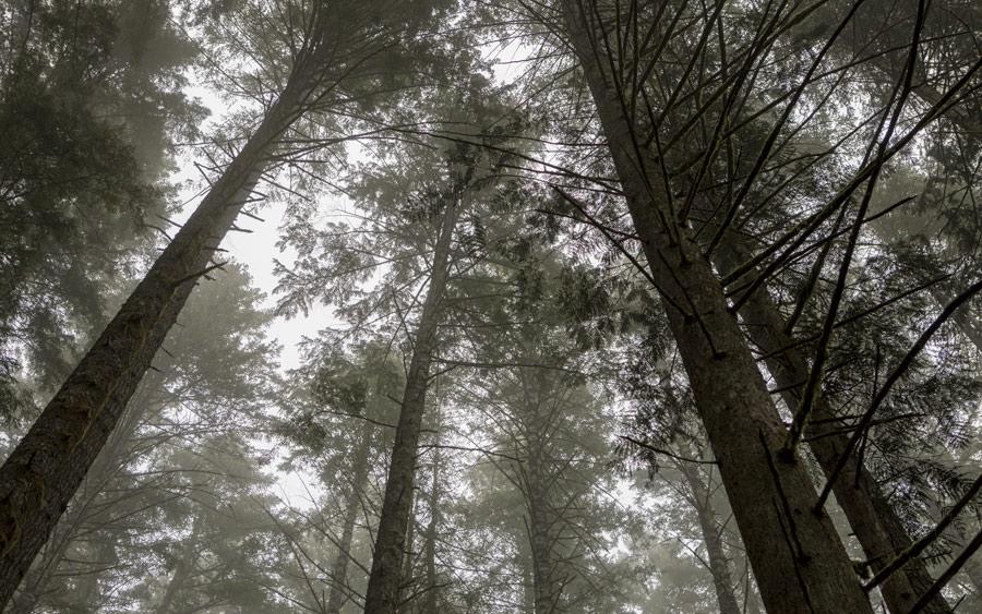 Trong tấm ảnh này cây cối tạo nên những đường dẫn, dẫn dắt hướng mắt bạn qua hình ảnh